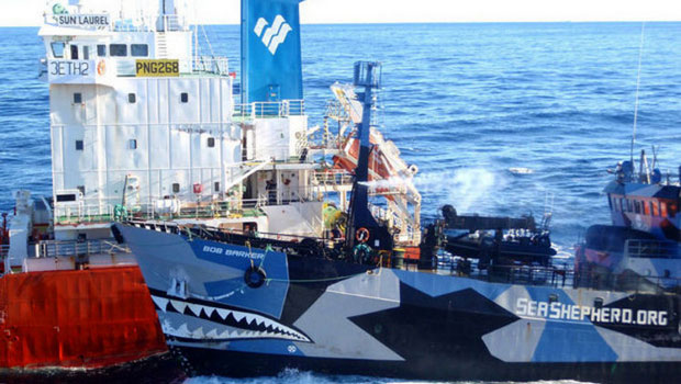 Sea Shepherd whale activists called pirates, lose ruling by 9th Circuit judges