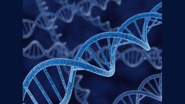 Cold Case DNA